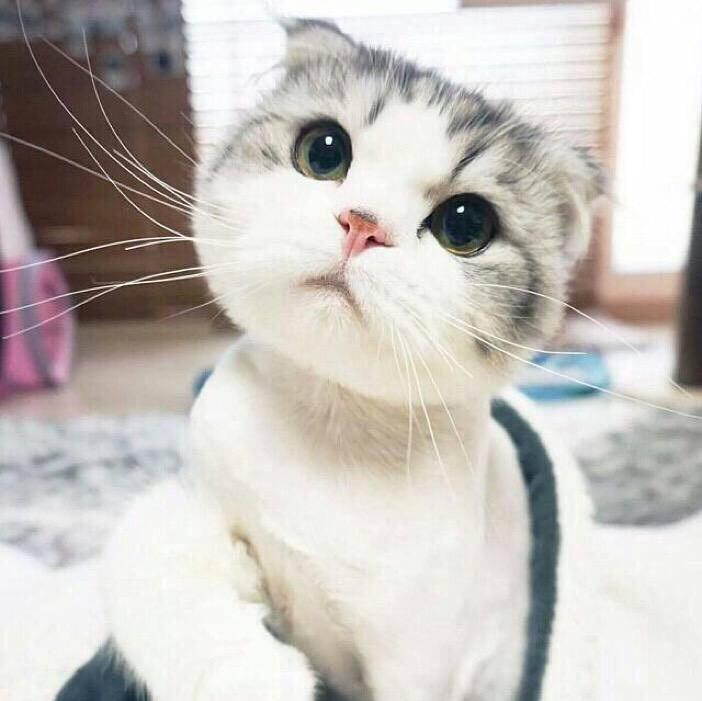qq分组动物图案猫咪图片2