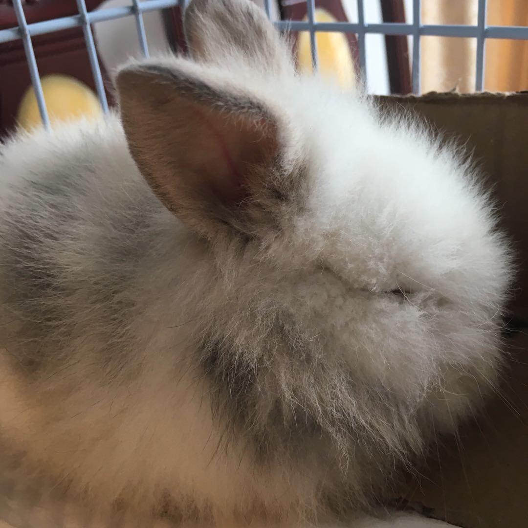 壁纸 动物 兔子 1080_1080
